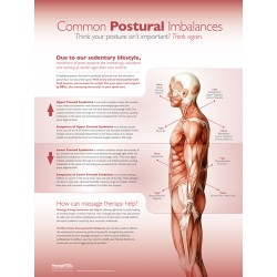 Upper and Lower Crossed Syndrome Poster