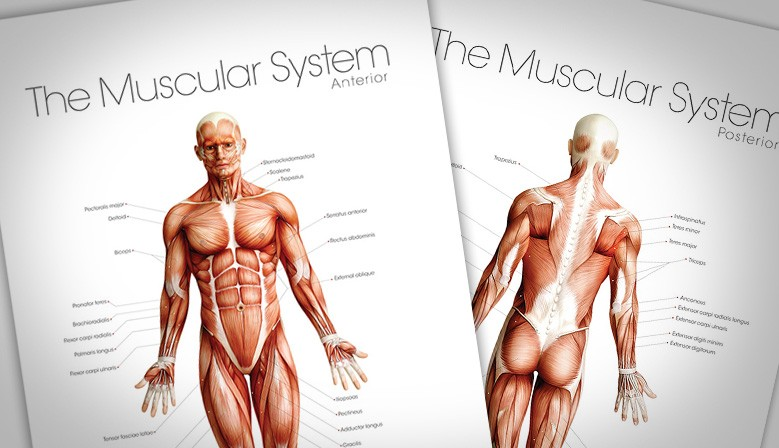 Massage Therapy Posters